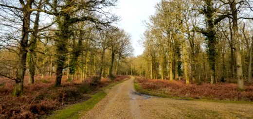 A New Forest scene. Photograph by Graham Soult