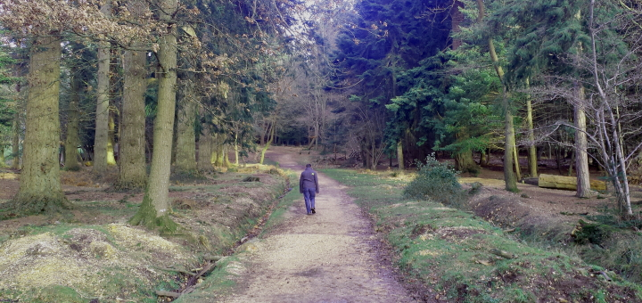 Walking in the New Forest. Photograph by Graham Soult